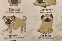 A guide to pugs