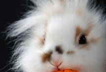 Cute bunnies / by Haydn Acko