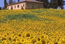 ❀Field Of Flowers & Garden,Wildflower In Blooms