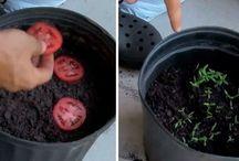 Remedios naturales - Horticultura