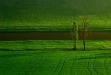 inspiration - Colour Green