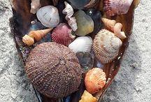 Meraviglie dal mare ... / Conchiglie