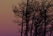 Nature & Landscapes / by Sheri Lee