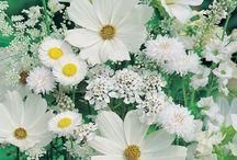 Flores Blancas / White Flowers / Todas las flores de color blanco que nuestros arreglos florales y de las que nos encantan de nuestros amigos Pinterest