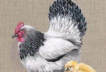 poule 6