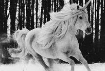 ∷ U n i c o r n L ♥ v e ∷ / My Weird Obsession with Unicorns