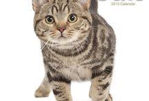 2015 cat calendars / by MegaCalendars.com