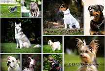 SPECIAL OFFERS / Special offers from PJL Photography
