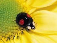 Ladybugs / by Isaura Beekhuizen