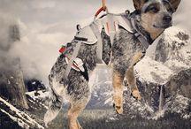 Adventure Dogs / by Survival Gear Canada