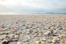 ⭐️Schelpen/Shells