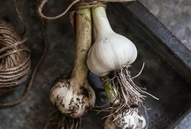 Photography: Farm to Table