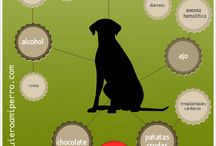 QuieroamiPerro / Imágenes e infografías relacionadas con el mundo de los perros: adiestramiento, alimentación, cuidados, raza, etc.