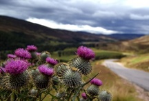 Craigatin's Scotland / Craigatin House - Images of Scotland that we like!