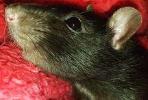 Gerrat Butler / My handsome boy ;)  Rat :D