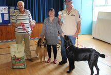 Summer Fayre Fun Dog Show Aug 2015 / Fun Dog Show photos