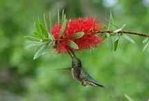 Birds / by Robin
