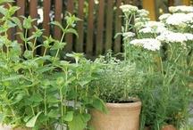 Kräutergarten und Gartengestaltung / praktisches und Ideen