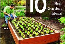 Garden Ideas / Garden plans and layouts for my veg plot