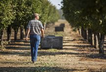 The Farmers Behind Sunsweet / Meet our co-founders and makers who work relentlessly to seed, grow & harvest our delicious prunes.
