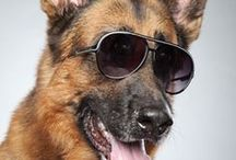 German Shepherd love. My dog Harley...or is it Max? / Dog fun. Dog Humor. Dog lies. Things Harley & Max would approve of.