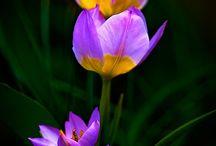 Flori si