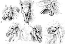 Anatomy-Skeletons-Animals-Horses