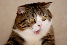 Cats / Funny Cat Photos