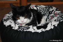 Cats =^..^= Pokey  / by Joan Halbig