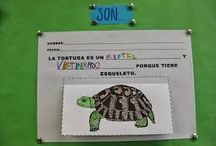 proyectos tortugas