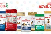 Buy Pets Supplies Online | Dogs for Sale in Coimbatore / Find pets for sale from our reliable RK Pets, Coimbatore. Buy pets like dogs, cats, fish, exotic birds and also their supplies online at affordable rate.