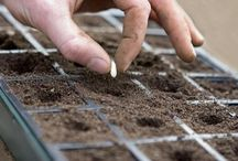 Tips Jardinage
