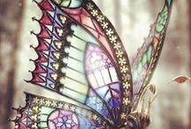 Butterfly♡♥