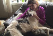 Bilder av mine og venners hunder:) / Kjekke turer og aktiviteter❤️