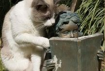Cats and Other Animals / by Michaelle Peters