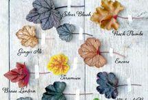 Растения для сада / Деревья, кустарники, многолетние и однолетние травянистые растения для сада.