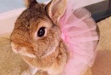 Tavşanlar / tatli,zeki,guzel tavsanlar