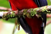 Birds / Beautiful variety of birds