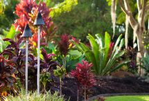 Dream Garden Inspo