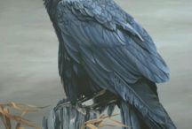 Reference: Raven