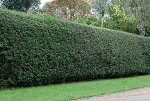 Hedges Haies
