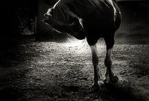 Photograhy / by Sara M Cabello