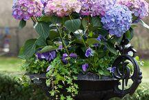Zahrada / květiny