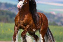 Wszystkie konie sa piękne, mądre i wierne... LUDZIE nie zawsze dorastają do ich przyjaźni