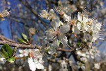 Primavera 2015 / Spring 2015 / #Ofertas #casa #rural #galicia En nuestro #jardin centenario descubrirás plantas y árboles de gran belleza