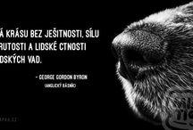 psí citáty
