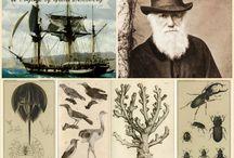 Darwin Project / An entangled bank of pins while I read Darwin.