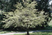 bomen heesters
