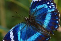 Motýli / Duhová duha.