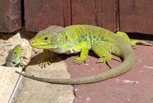 Fauna do jardim da Casa Catita / Animais selvagens encontrados no jardim
